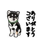 黒豆柴っち(個別スタンプ:9)