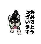 黒豆柴っち(個別スタンプ:10)
