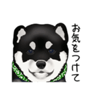 黒豆柴っち(個別スタンプ:12)
