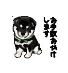 黒豆柴っち(個別スタンプ:16)