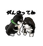 黒豆柴っち(個別スタンプ:17)