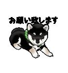 黒豆柴っち(個別スタンプ:19)