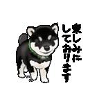 黒豆柴っち(個別スタンプ:20)