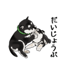 黒豆柴っち(個別スタンプ:22)