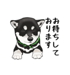 黒豆柴っち(個別スタンプ:24)