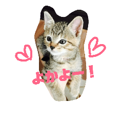 博多弁猫まりん改