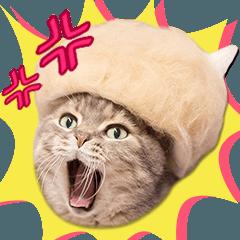 「抜け毛帽子」かわいい猫の実写スタンプ2