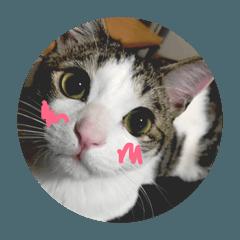 CAT&ferret★