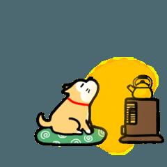 柴犬ちゃこまる【冬】