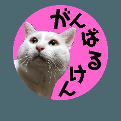 博多弁2『チワワのピトとネコのシロキチ』