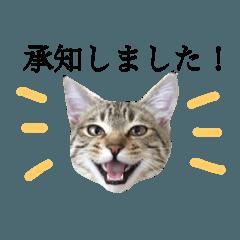 敬語ミックス猫田むぎ