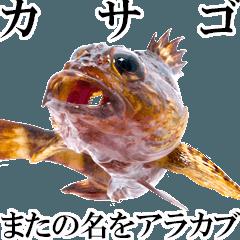 お魚図鑑『カサゴ』リアクション系言葉多め