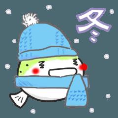 ミドリフグのぷっくん 【冬】