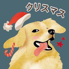 クリスマス - ゴールデン・レトリバー