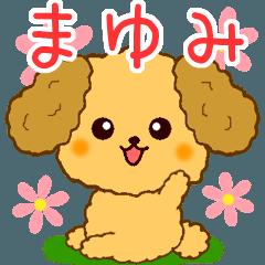 トイプーちゃんの日常【まゆみ編】