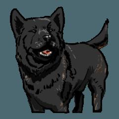 甲斐犬の琥珀と琥春