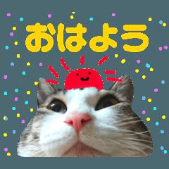 ねこ達と柴犬スタンプ★