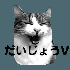 ネコ達が話す 懐かしい流行語&死語