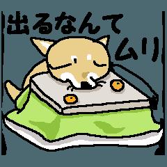 しばさん(冬!)