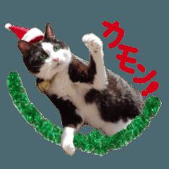 実写!はちわれ猫冬のイベントスタンプ