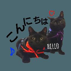 黒猫兄弟 そらりく敬語 Ver.2