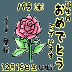 12月、誕生日ごとの誕生花と花言葉。