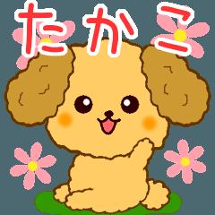 トイプーちゃんの日常【たかこ編】