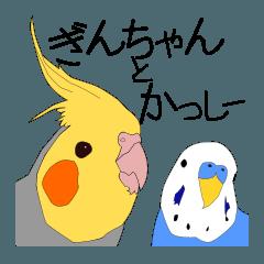ぎんちゃんとかっしー+インコさん[日常]