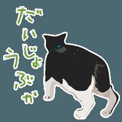 離れて住む家族へ猫と声かけ2