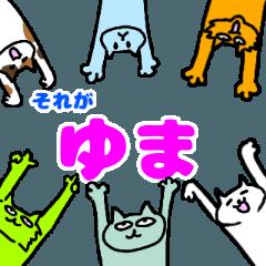 ゆまという猫たち