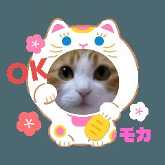 愛猫モカ&マオ