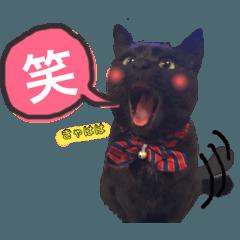 黒猫のビビのスタンプ②ちょっと敬語ver.