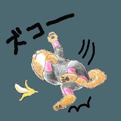 かわいすぎるわんこたち(ほぼ雑種)8