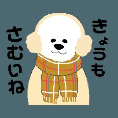 ビションのフリーゼくん*゜ふゆver.