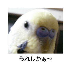博多弁話すココちゃん