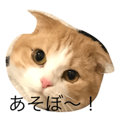 猫のめんまちゃん