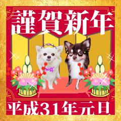 あけおめチワワ&黒猫・猪☆動く!