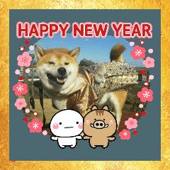 2019年 柴犬マメ郎(亥年)