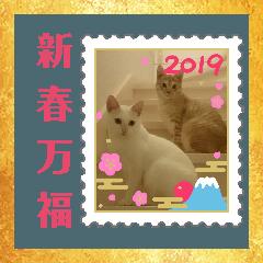 雪慶ニャーズ 正月Ver.