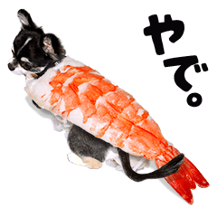 京都ことばのチワワのあずき 食いしん坊編