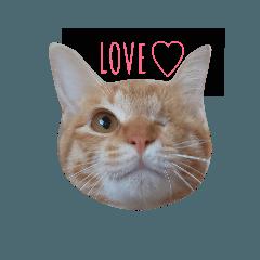 [LINEスタンプ] 片目猫みちる1