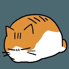 とけている猫