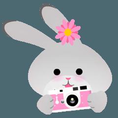 チェルシーウサギ