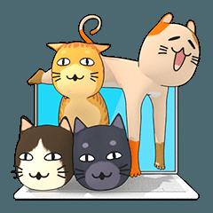 クール猫の家族