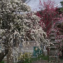 花の四季群生編2