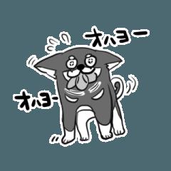 黒柴トリオの愉快な日常