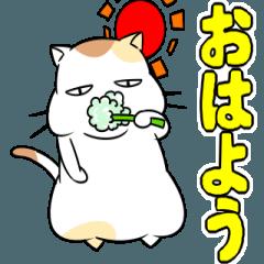 がんばるデブ猫3