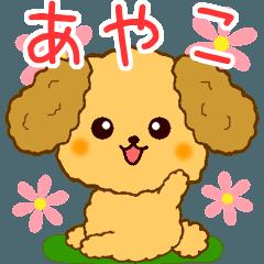 トイプーちゃんの日常【あやこ編】
