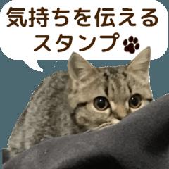 ミヌエットのショコラの子猫写真スタンプ6