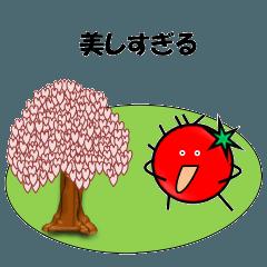 ほめ言葉-桜、そしてトマト?